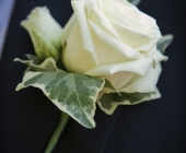 Rose, Lisianthus and Varigate Ivy Buttonhole